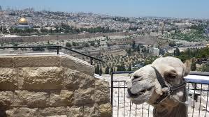 """Résultat de recherche d'images pour """"la Vieille Ville de Jérusalem."""""""