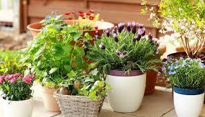 Чем подкормить <b>комнатные</b> цветы в домашних условиях?