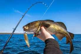 Goture <b>Spinning Fishing Reel Metal</b> Spool Review - My Fishing Tools