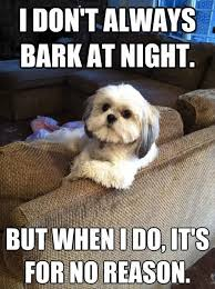 Me and My Dog Quotes | funny dogs | Stuff to Buy | Pinterest ... via Relatably.com