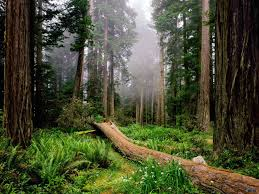 Resultado de imagen de foto de bosque