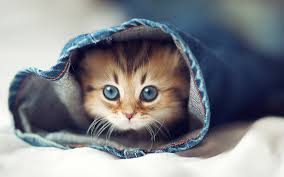 cute cats =) Images?q=tbn:ANd9GcSmDxiok_NxpkIt5JuqCJT0S7jV5EW1-VtXrrKMyQTsUNvIFN0V