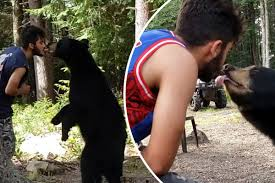 Man feeds wild <b>bear</b> out of his <b>mouth</b> (Video) | New York Post