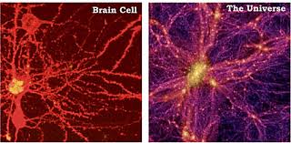 Image result for neuromelanin in the pineal