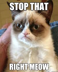Stop that Right meow - Grumpy Cat is so sick of this shit - quickmeme via Relatably.com