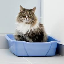 Image result for cat in litter box