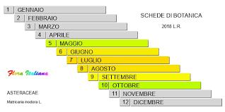 Matricaria inodora [Camomilla inodore] - Flora Italiana