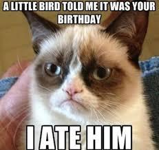 Memes Vault Funny Angry Cat Memes via Relatably.com