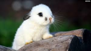 Image result for cute bunnies wallpaper
