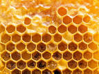 Images & Illustrations of propolis