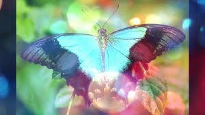 beautiful butterfly beautiful butterfly