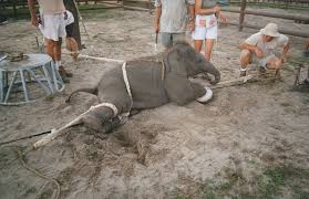 be nice to animals animals in circuses are ill treated animals in circuses are ill treated