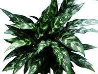 38 лучших изображений доски «pot flowers» | Комнатные цветы ...