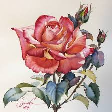 <b>Light</b> beautiful <b>rose</b> Painting   Картины роз, Рисунки цветов ...