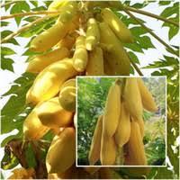 <b>Papaya Seeds</b> Online Shopping | <b>Papaya Seeds</b> for Sale