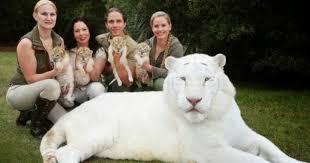 ligres blancos