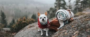 Hurtta - одежда для <b>собак</b> из Финляндии