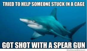Shark Meme | WeKnowMemes via Relatably.com