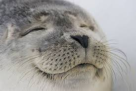 This is the most satisfied seal I've ever seen : pics via Relatably.com