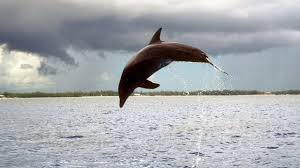 <b>Dolphins</b> 'call each other by name' - BBC News