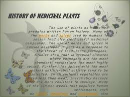 Image result for how to use herbal plants