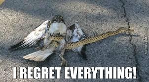 Bird Attacking Snake Did Not Go As Expected by kickassia - Meme Center via Relatably.com