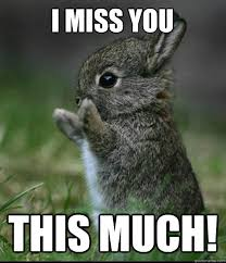 i miss you this much! - Dis much bunny - quickmeme via Relatably.com