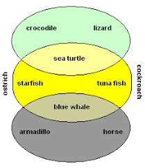 venn diagramsbelow we show some examples of animals in each category of the venn diagram