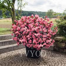 <b>50pcs</b> / <b>bag Begonia</b> Bonsai, mixed color bonsai flower Begonia ...