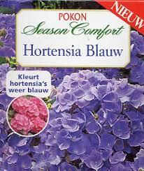 Afbeeldingsresultaat  voor hortensia blauw