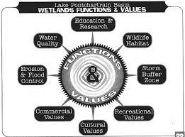 Image result for IMPORTANCE OF WETLANDS