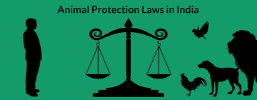 laws that protect animals in the wildlife protection act