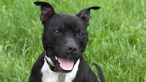 Image result for dog images