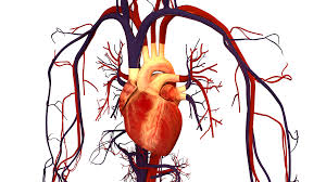 joseph cooper wlrn 3 29 2017 on today s topical currents we discuss innovations in interventional cardiac procedures and management of risk factors for heart disease