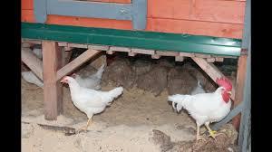 Дезинфекция загона для <b>домашней</b> птицы водной взвесью ...