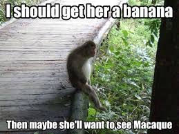 Lonely Macaque Meme | WeKnowMemes via Relatably.com