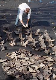 Промысел акульих <b>плавников</b> — Википедия