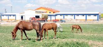 At çiftlik resmi ile ilgili görsel sonucu