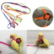 1PC Nylon Parrot Training Rope Adjustable Bird Flying Leash - Vova
