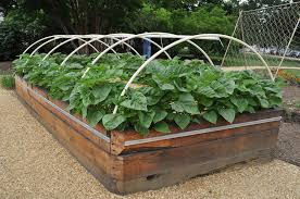 Small Picture Raised Beds Vegetable Garden Interior Design Ideas