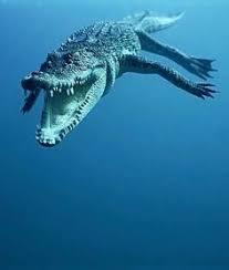Pin on <b>Alligators</b> & crocodiles