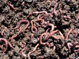 Resultado de imagen para Lombricultura En la alimentación de animales,