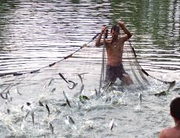 Aqua Culture Around Bhimavaram