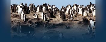 south america cruises amazon cruises cruises south america penguins