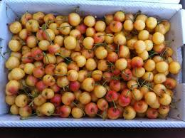 produce clerk the produce clerks handbook by rick chong low color wind scuffed rainier cherries for local s