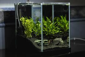 <b>Удобрения для аквариумных растений</b>: виды подкормок ...