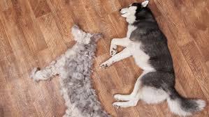 <b>6</b> Tips to Control Dog Shedding