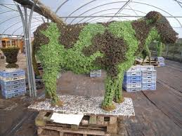 Image result for topiary moss