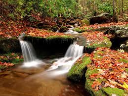 لكل محبي صور الطبيعة  اكبر تجميع لصور الطبيعة - صفحة 3 Images?q=tbn:ANd9GcSqCQKWmFKSgCUAdLK5kqDmTsBiRpCisV3xxjNoXzXxb3sdzA4CdA