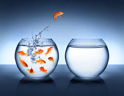 what s your passion the elite hotelier goldfish jumping improvement and career concept